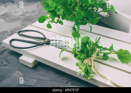 Fresh salad with large Vintage scissors on a black wet surface. - Stock Photo