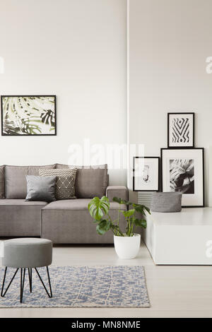Gray couch with pillows behind a stool on blue carpet in bright living room interior with botanic posters and monstera plant. Real photo - Stock Photo