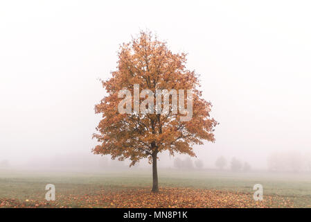 A solitary tree in the mist beside the Purley Way, Croydon - Stock Photo