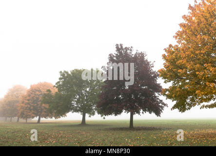 A line of trees in the mist on parkland beside the Purley Way, Croydon - Stock Photo