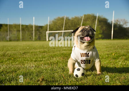 Little dog is sitting on the football field. The pug wears a tricot with the German abbreviation for the Football World championship  2018. He is atte - Stock Photo