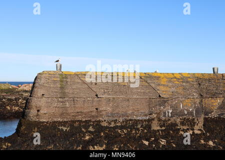 Seagulls sitting on old pier with clear blue sky and rocks in background - Stock Photo