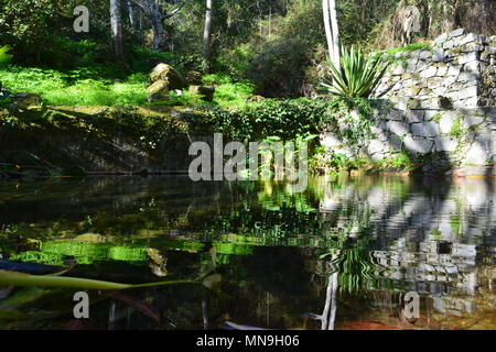 Luscious, green vegetation and ripples on a natural spring pool in Caldas de Monchique in the Algarve, southern Portugal - Stock Photo