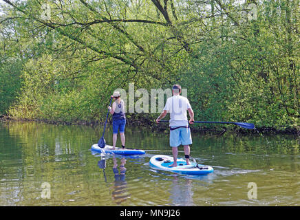 Two young adults standup paddle boarding on the River Bure on the Norfolk Broads near Wroxham, Norfolk, England, United Kingdom, Europe. - Stock Photo