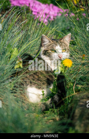 Vertical photo of adult cat. Animal is hidden among several flowers with pink and yellow color and few kind of green grass. Cat has nice white face wi - Stock Photo