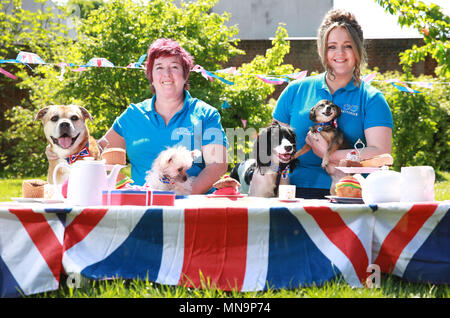 Editorial Use Only Battersea Dogs Cats Home Staff And Dogs From The Charity S Old Windsor Centre Take Part In A Street Party To Celebrate The Upcoming Royal Wedding Stock Photo