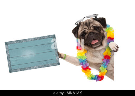 frolic summer pug dog with hawaiian flower garland and sunglasses, holding up blue vintage wooden board, isolated on white background - Stock Photo