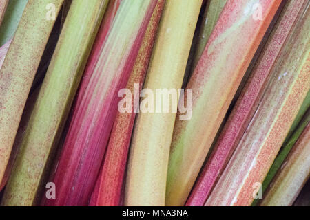 freshly cut sticks or stalks of rhubarb on display at borough market in london. Healthy eating fruits and vegetables Rhubarb stalks fresh fruits. - Stock Photo
