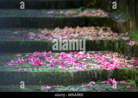 Fuchsia fallen petals on the ground in autumn with selective focus. Staircase steps with green moss covered with colorful purple petals on the floor - Stock Photo
