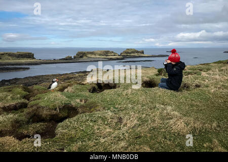 Young boy taking a photo of a puffin on the Scottish Island of Lunga - Stock Photo