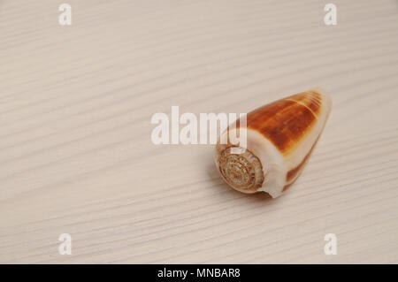 Brown seashell on white wooden background with copy space - Stock Photo
