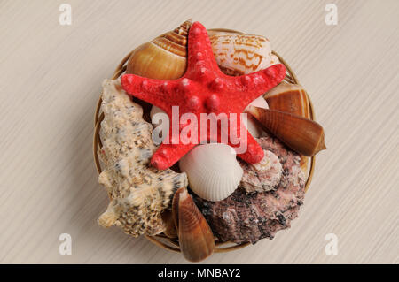 Seashells collection on wooden background - Stock Photo