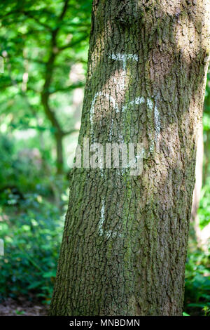 Initals of lovers on a tree trunk - Stock Photo