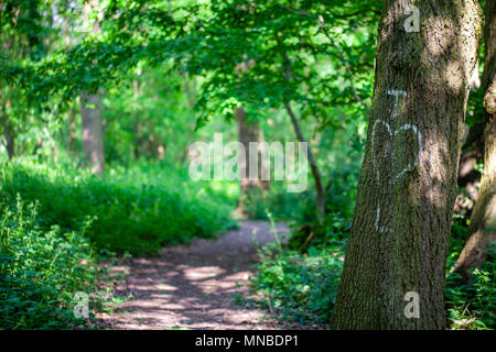 Initals of lovers written in chalk on a tree trunk - Stock Photo