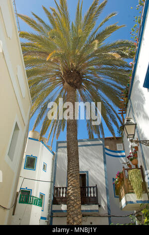 Huge palm growing between and over houses and providing shade in the city of Puerto de Mogan, Gran Canaria, Spain - Stock Photo