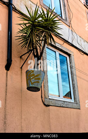 Spiky plant in hanging bucket by house window in the Castle area of Lisbon - Stock Photo