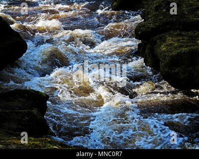The turbulent waters of The Strid, a dangerous section of the River Wharfe near Bolton Abbey. - Stock Photo