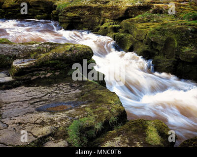 The gushing waters of The Strid, a dangerous section of the River Wharfe near Bolton Abbey - Stock Photo