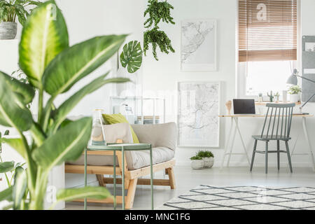 Maps on white wall near beige couch and desk with laptop in freelancer's interior with grey chair - Stock Photo
