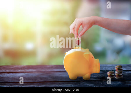 Hand hold and dropping coin in piggy yellow piggy bank, piggy bank on old wooden table with blurred background, safe money concept - Stock Photo
