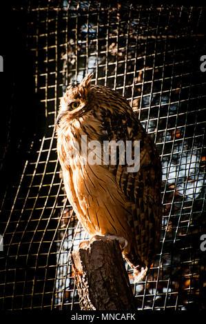 Buffy fish owl in Prague zoo - Stock Photo