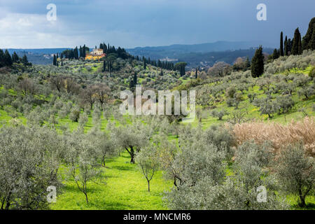 Picturesque springtime landscape view and olive trees in the hills near Florence, Tuscany, Italy - Stock Photo