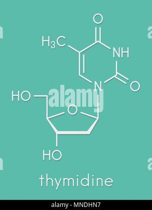 Thymidine (deoxythymidine) nucleoside molecule. DNA building block. Skeletal formula. - Stock Photo
