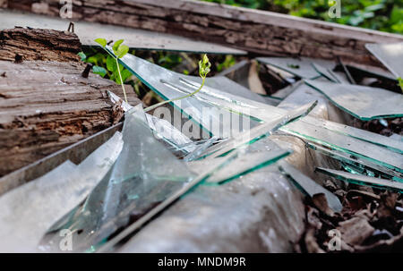 Beauty broken glass in old wooden and spring grass - Stock Photo