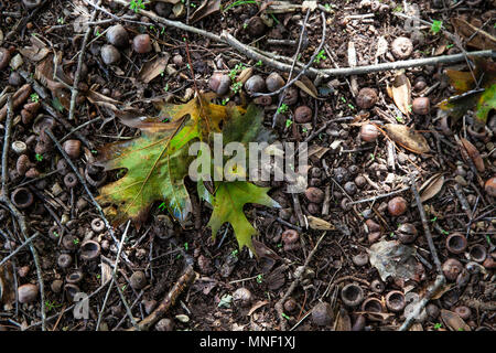 Fallen Leaves On The Forest Floor Brightly Coloured