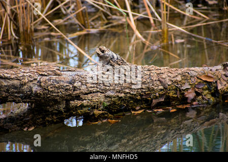 Log in water - Stock Photo