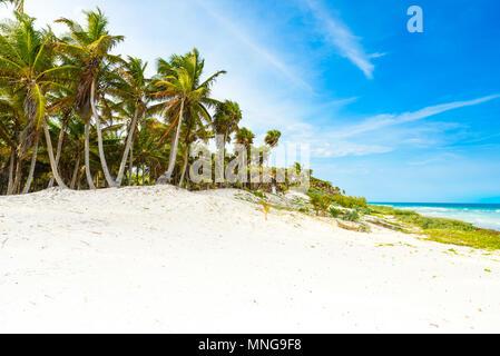 Paradise beach with beautiful palm trees - Caribbean sea in mexico, Tulum - Stock Photo