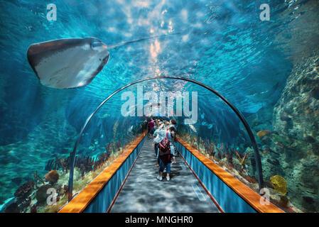 Tenerife, Spain - May 4, 2018: Aquatic tunnel in the Loro parque aquarium on may 4, 2018 in Tenerife, Spain. - Stock Photo