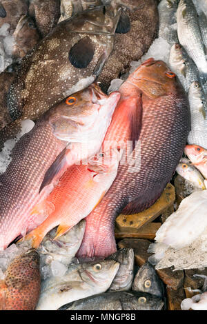 Various types of fish are displayed on the table for sale in the market. The fish is mixed with ice to preserve its freshness. - Stock Photo
