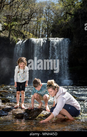 The Four Waterfalls Walk near Pontneddfechan in the Brecon Beacons - a family plays in the water at the Sgwd yr Eira falls (Falls of Snow) on the Rive - Stock Photo