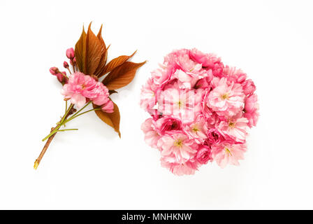 Pink Apple Blossom on white background - Stock Photo