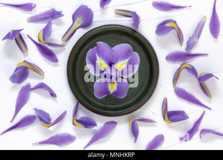 Purple Iris from above with scattered Petals - Stock Photo