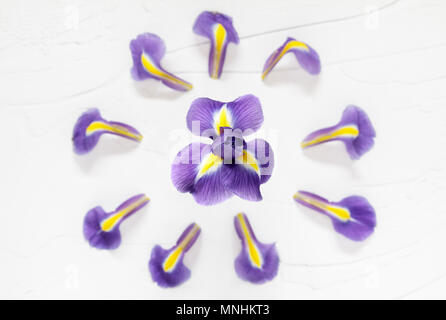 Purple Iris surrounded by Petals - Stock Photo
