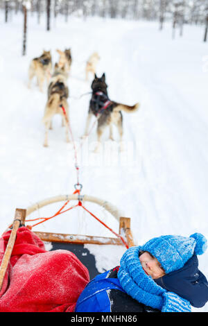 Husky dogs are pulling sledge with a kid at winter forest in Lapland Finland - Stock Photo