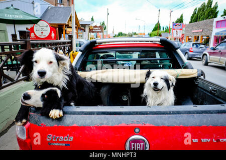 Three dogs waiting in back of parked truck and looking at camera, El Calafate, Santa Cruz, Argentina - Stock Photo