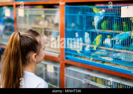 Little girl looking at birds in cages for sale at Birds market in Souq Waqif Doha,  popular tourist destination. - Stock Photo