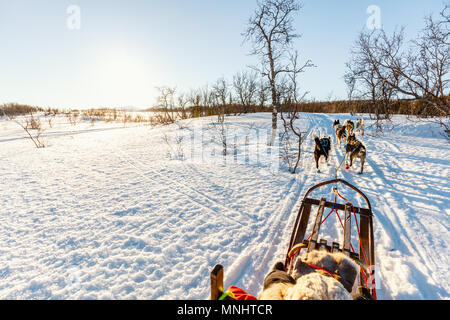 Husky dogs are pulling sledge with little girl on sunny winter day in Northern Norway - Stock Photo