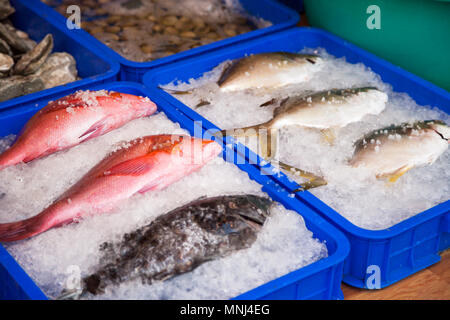 Fresh fish arranged in rows at seafood market. Raw fishes in trays with ice at a supermarket close-up. Focus on a red snapper - Stock Photo