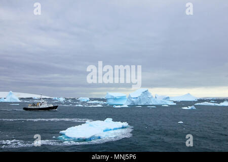 Cruise ship crusing around ice floes in Antarctic waters - Stock Photo