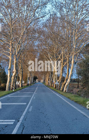 Road and winter trees in Alentejo, Portugal - Stock Photo