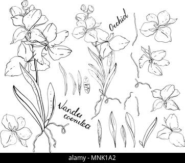 Set Of Isolated Silhouette Orchid Phalaenopsis In 27