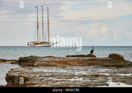 View of an anchored classic sailboat with Red Ensign flag and an european shag (Phalacrocorax aristotelis) in Formentera (Balearic Islands, Spain) - Stock Photo