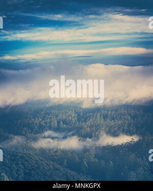 Foggy morning at Horton Plains. - Stock Photo