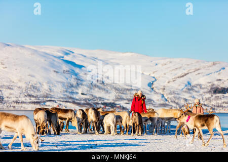 Family of mother and her daughter surrounded by many reindeer on sunny winter day in Northern Norway - Stock Photo