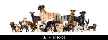 Large group of purebred dogs in studio against white background - Stock Photo