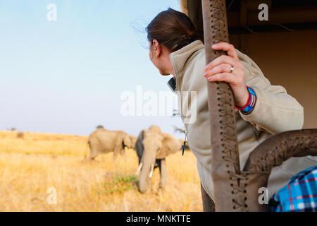 Woman on safari game drive enjoying close encounter with elephants in Kenya Africa - Stock Photo